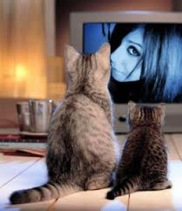 "THEY WATCH TRASH TV ""That Cecily is so catty...I like her!"""