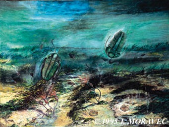 Cambrian Seascape (570-550mya)