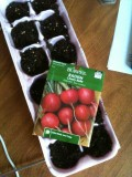 Radishes are usually quick to germinate...