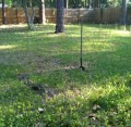 Garden area staked out