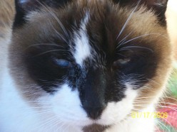 Gemini My Psychic Cat - Are Cats Psychic?