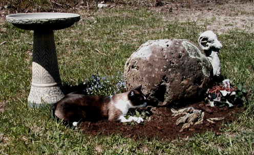 Cat Gardening.  The plant that Gemini is so lovingly hugging is catnip.  It never did grow very big because he kept nibbling the edges off the leaves.