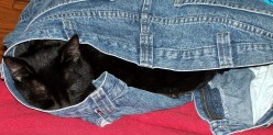 Soot napping in jeans