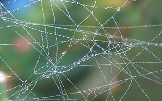 Morning Dew on the Spider Web (Photo by Travel Man)