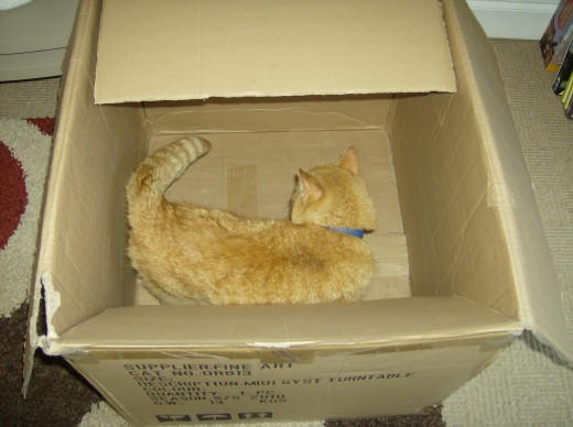 Cat sleeping in a box.