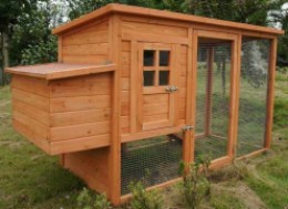 An attractive well-designed secure coop makes chicken care and egg collection easy
