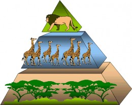 Vegetation forms the bulk of life forms and food sources, followed by herbivores and finally by a few carnivores at the peak.