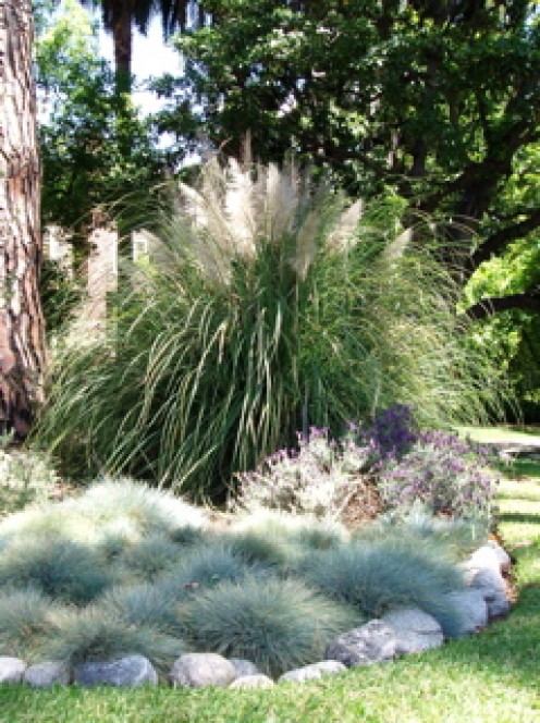 Varying colors and sizes of grasses.