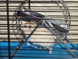 Never buy a hamster wheel that is designed like this one.