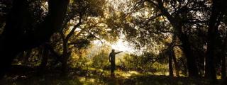 The Arcadia Woodlands that no longer exist.