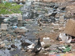 Polluted water has destroyed this habitat