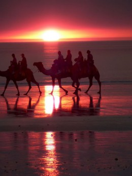 Broome Camel Rides