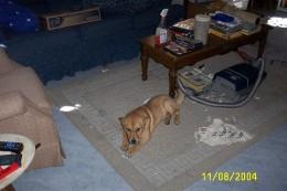baby Bruno making a mess