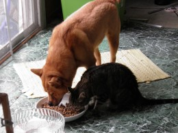 Bruno and Peanut having lunch together