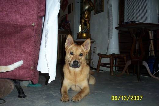Bruno posing