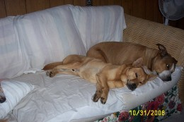 Bruno and Brandy taking a nap together