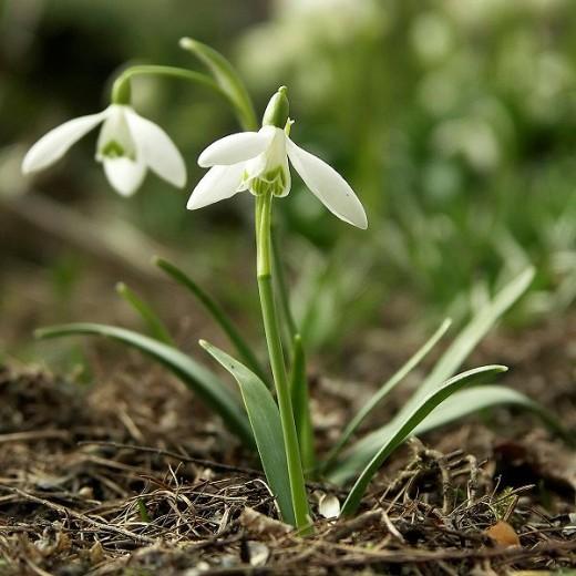 Spring is renewal