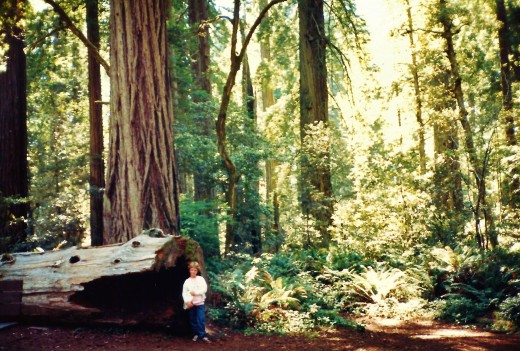 My niece in the Redwood National Park