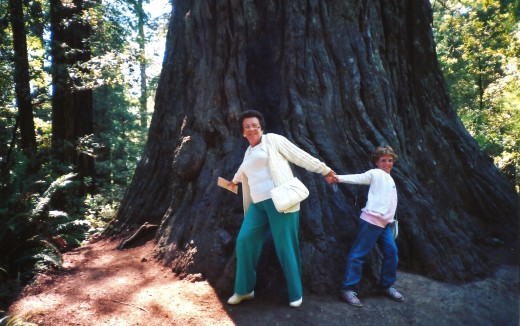 Look at the size of that redwood tree!