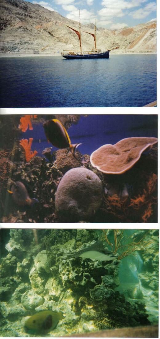 underwater corals, Eilat, Israel