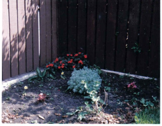 Corner spot where nothing would grow but impatient plant and silver mound in backyard.