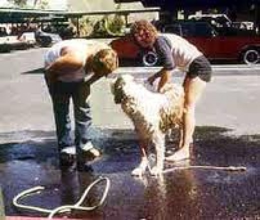 dog washing can pay well