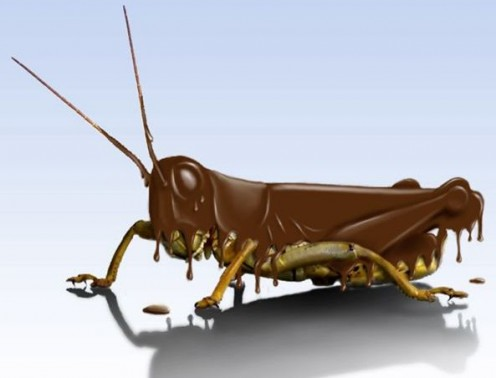 This chocolate grasshopper probably fell in a vat of chocolate but managed to escape.  Wonder if he left any parts in there?