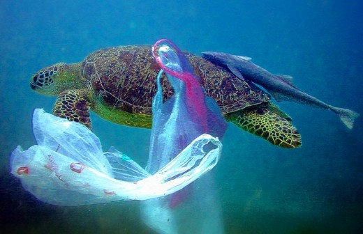 Plastic bags pollute our oceans