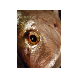 The Snapper (Pagurus auratus) is the best known food fish in NZ.