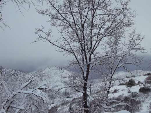 I especially love the oak trees with snow on them.