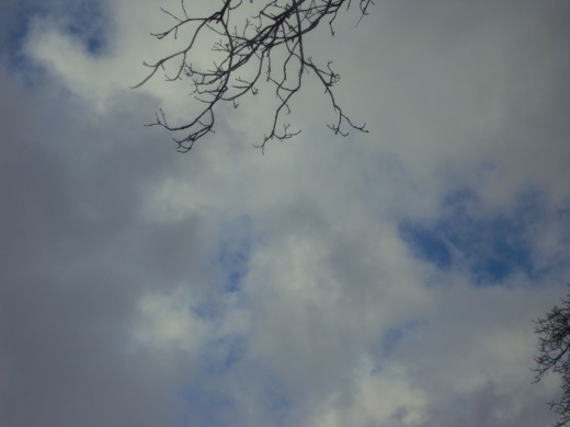 Branches and clouds in the sky.
