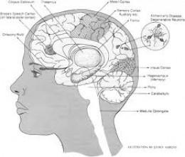 Map of Alzheimer's Disease