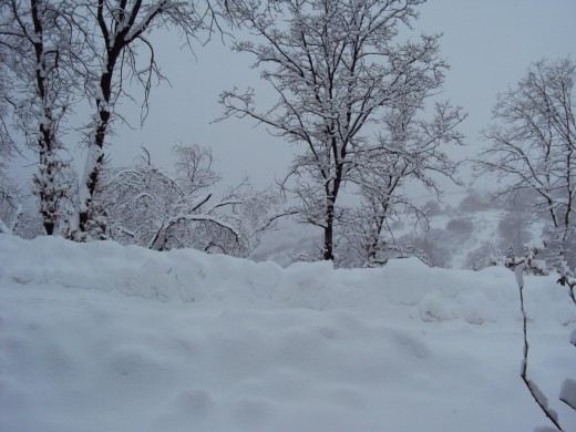 The beauty of a heavy snow.
