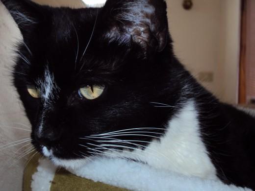 A closeup of Annie cat.