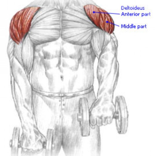 Dumbbell front raise.