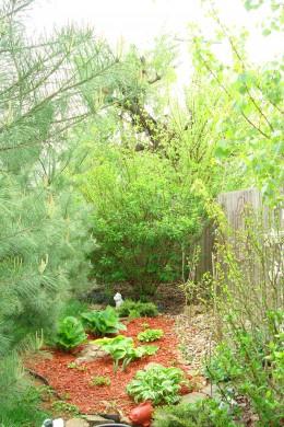 Hosta Garden located in my secret garden