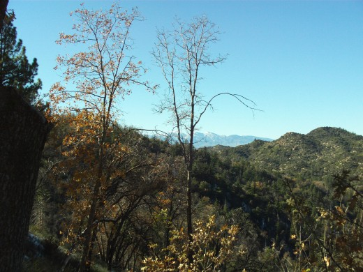 Trees slightly obscuring the view of Mount Baldy.