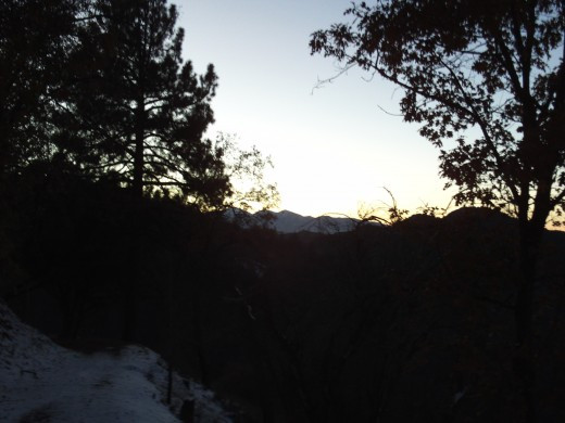 The trees and the snow at sunset in the San Bernardino Mountains.