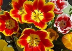 Frederik Meijer Garden, A Cure for Spring Fever