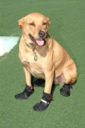 Dog Paw Mittens / Boots: How To Choose The Best Ones For Your Canine