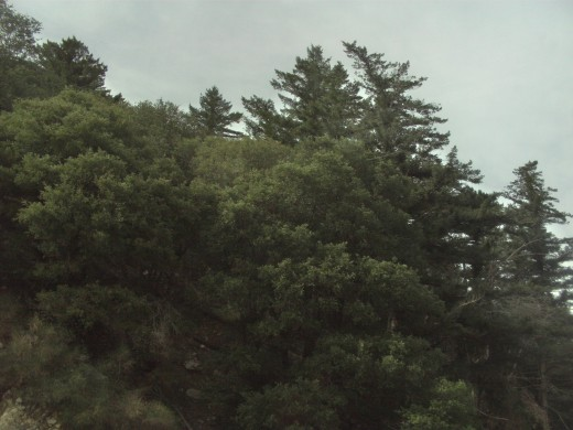 Trees along Highway 18.