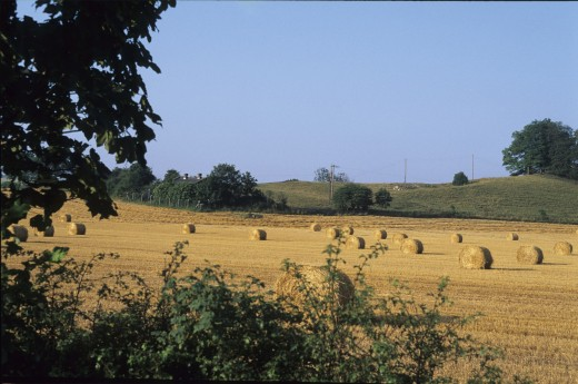 Harvest time on the Yorkshire Wolds