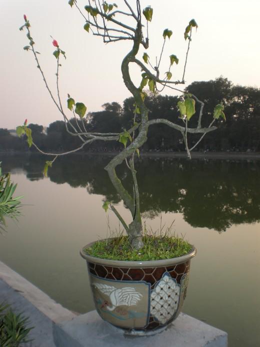Hoan Kiem Lake, Hanoi Vietnam