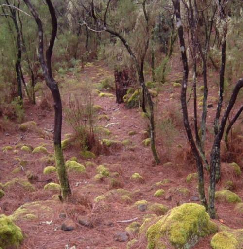 Woods at La Caldera