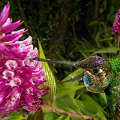 Helping Those Amazing Hummingbirds: Hummingbird Feeders