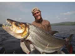 Goliath Tigerfish