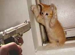 Elusive Cat Burglar Finally Caught!