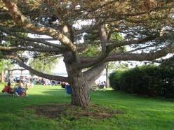 Trees-Magical, Mysterious, and Sacred