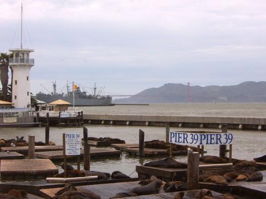 Pier 39 / Fishermans Wharf Sea Lions
