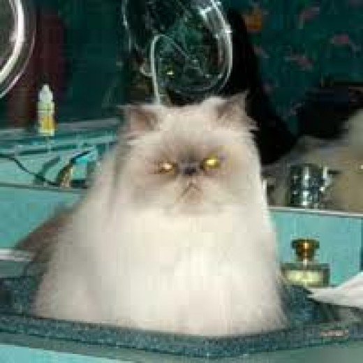 """SOMEONE LEFT A LITTLE PIECE OF SOAP IN THIS SINK!  IT IS CHAFING MY FUR!  I AM NOT PLEASED."""